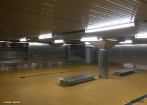 Equipement LED de deux hâloirs avec des OPALINE Tubulaire à LED